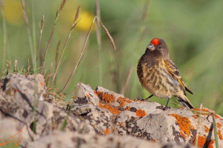حفاظت از پرندگان با توسعه صنعت پرنده نگری