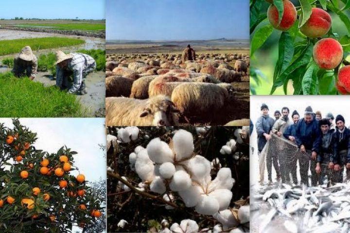 تخصیص اعتبار از صندوق توسعه ارزی به اشتغالزایی روستایی