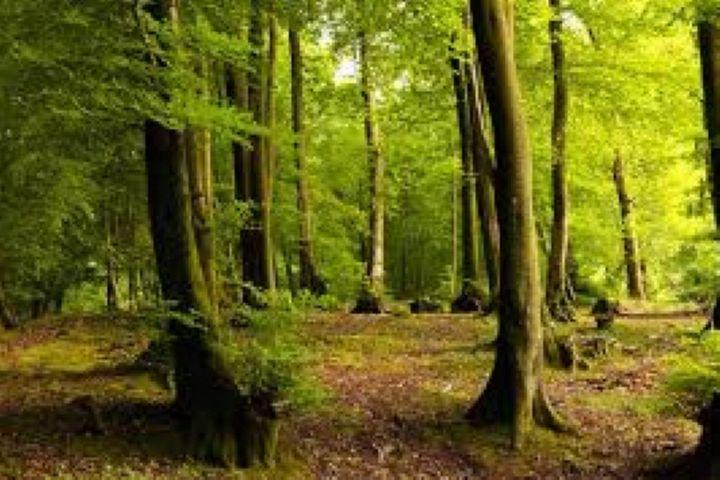 جنگلهای هیرکانی ایران مادر جنگلهای اروپا