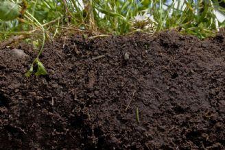 «صادرات» هر نوع «خاک» ممنوع است/«قاچاق» این بار از نوع «خاک»