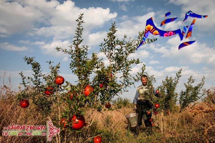 معرفی سبک زندگی روستایی زیزگان در برنامه «آیش» رادیو فرهنگ