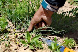 حفاظت از گونه های گیاهی را فراموش نكنیم