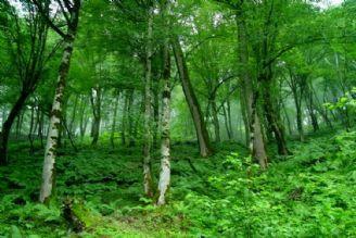 نگاهی كوتاه به فواید درختان و وضعیت جنگل های كشور