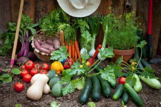 فصل بهار، فرصتی برای كاشت سبزی و صیفی جات