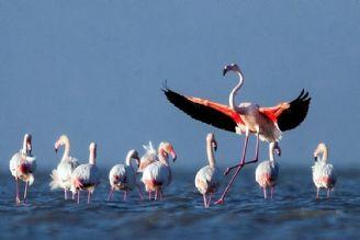 مهمان كُشی نكنیم؛ پرندگان مهاجر مهمان ما هستند