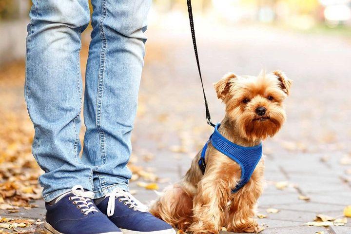 آیا شما با نگهداری از حیوانات خانگی موافق هستید؟