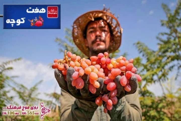 انگور در فرهنگ مردم در رادیو فرهنگ