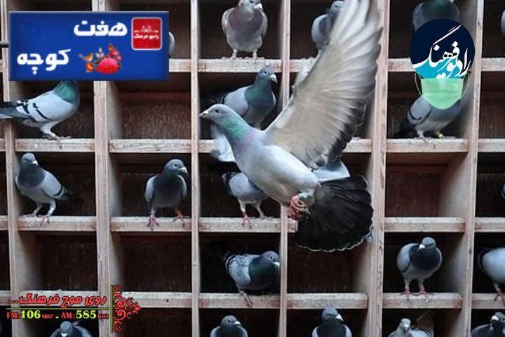بررسی جایگاه کبوترخانه ها در ایران در « هفت کوچه»رادیو فرهنگ