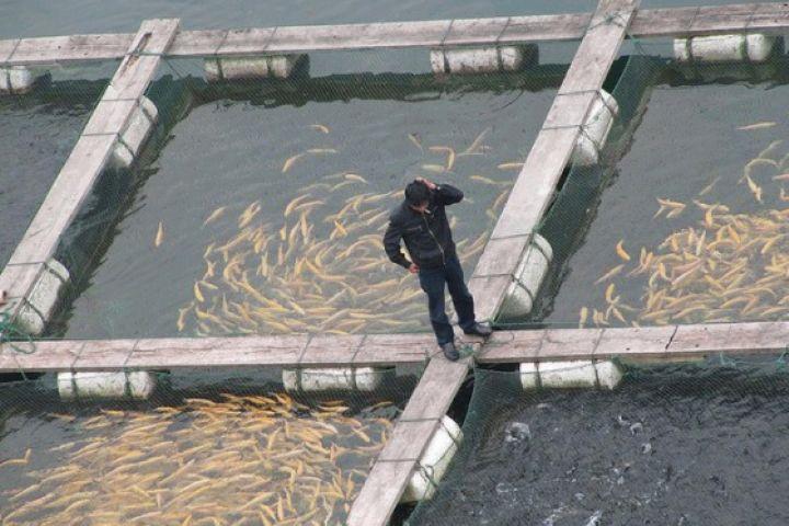 پرورش ماهی سردآبی در استان كرمانشاه
