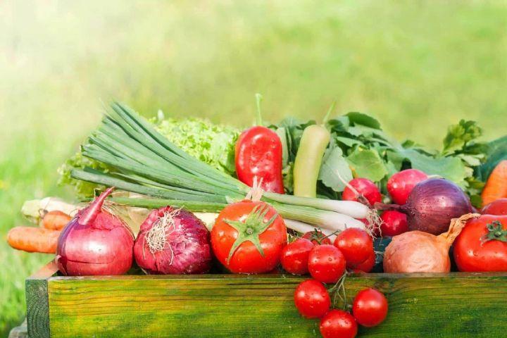 روز جهانی غذا و محصولات سالم و ارگانیك