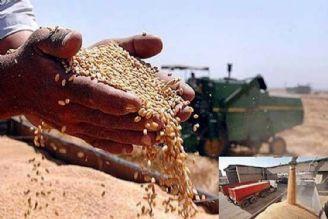خرید تضمینی گندم، انگیزه تولید گندم با كیفیت را از بین می برد