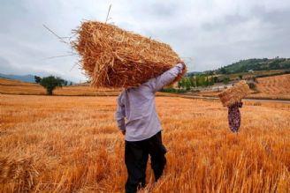 تخلف دولت در عدم خرید گندم تضمینی با قیمت واقعی به قوه قضائیه ارسال شده است