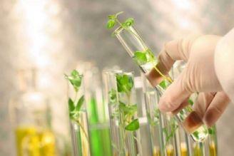 علمی شدن كشاورزی نتیجه حضور شركت های دانش بنیان است