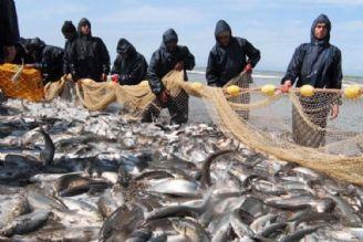 دستیابی به بیوتكنیك تكثیر و پرورش كپور ماهیان هندی و چینی  از دستاوردهای شیلات است