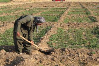 توسعه كشاورزی روستایی نیازمند برنامه ریزی اصولی است