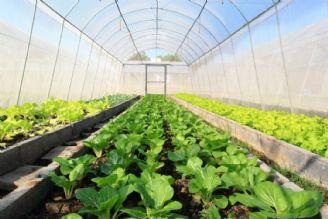 كشت گلخانه ای در شرایط كم آبی توصیه می شود
