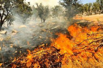 حریق در تنگستان و دشتستان؛ طبیعت سرسبز استان بوشهر در آتش سوخت/ پای گردشگران در میان است