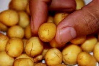 حجم بذر وارداتی به كشور 7500 تن است