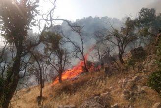 جنگلهای ایران مستعد آتشسوزی طبیعی نیستند