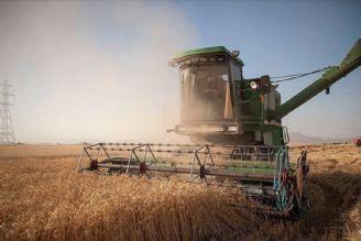 افزایش 4درصدی برداشت گندم نسبت به سال گذشته