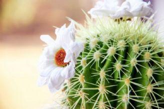 كاكتوس در رادیو گفت و گو گل كرد/ سرنوشت تبر و طبر در كاكتوس