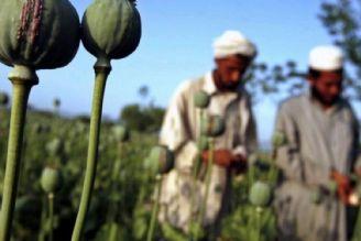 نیروهای بیگانه در افغانستان به دنبال توزیع هدفمند مواد مخدر در جهان