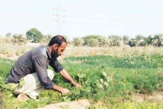 محصولات کشاورزی خوزستان از 1.7 به 5 میلیون تن افزایش یافت