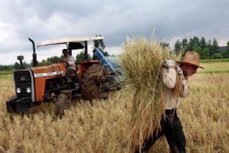 برای جبران هزینه كشاورزان، افزایش خرید تضمینی گندم ضروری است