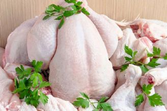 کمبود مرغ، امنیت غذایی جامعه را تهدید میکند