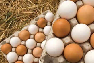 قیمت تخممرغ برای مصرف کننده 14 هزار و 500 تومان است