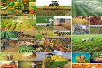 «سامانه بازارگاه» سبب سردرگمی تولیدکنندگان شده است