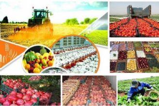 بهداشت محور کردن تولیدات کشاورزی؛ سیاست اصلی وزارت جهاد