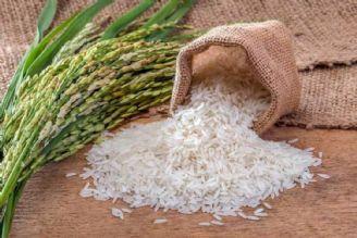 گرانی فزاینده، بازار برنج کشور را تهدید میکند