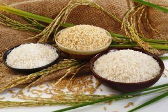 کشاورز: برنج از سفره مردم حذف شده است/ علیزاده: افزایش قیمت برنج منصفانه است!