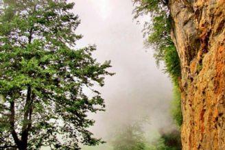 اولین دوره جشنواره جنگل بان در نهم مرداد برگزار می شود