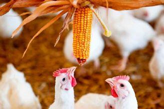 تحلیل چالش های توزیع و تأمین خوراک مرغداری های کشور