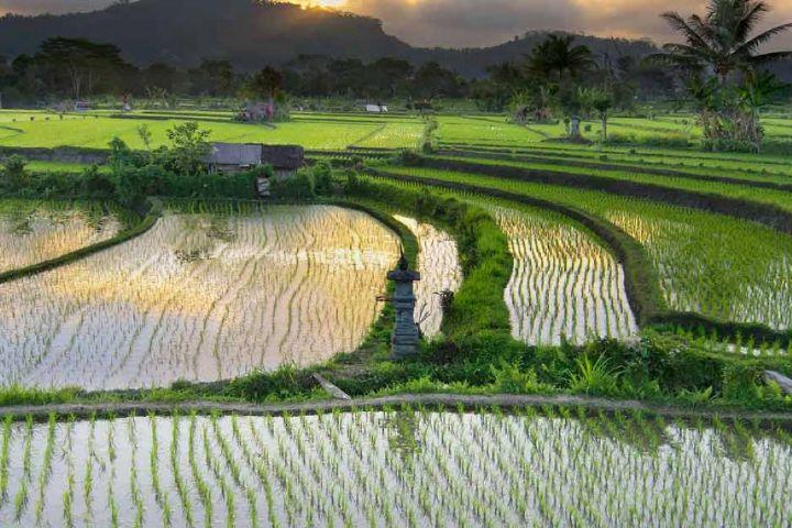 وجود 450 هزار هکتار اراضی شالیزاری در استان های شمالی کشور