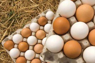 قیمت تخممرغ کاهش مییابد