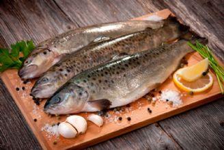 میگو و ماهی نسبت به دیگر مواد غذایی به صرفه ترند