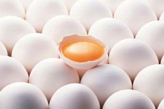 طرح تنظیم بازار تخم مرغ از امروز آغاز شد