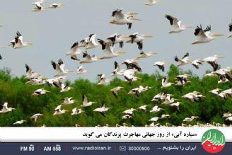 «سیاره آبی» از روز جهانی مهاجرت پرندگان می گوید