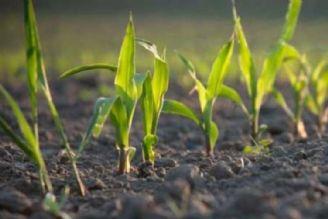 کودهای زیستی، عملکرد محصول را تا 20 درصد افزایش میدهد