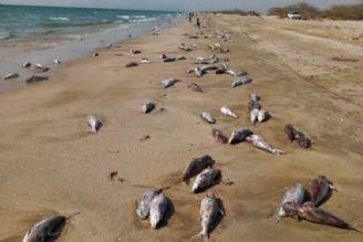 نابودی برخی گونههای دریایی با گرمایش زمین