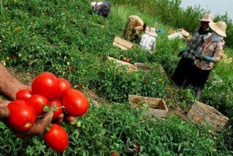 طرح «پشتیبانی از تولیدات کشاورزی» در دستور کار مجلس