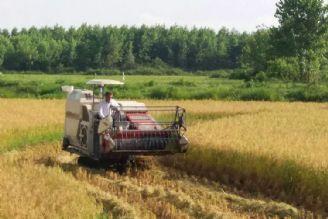 حمایت وزارت جهاد کشاورزی برای مکانیزه کردن برنج باعث رشد دو برابری آن شده است