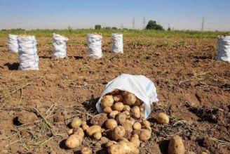 خرید تضمینی حدود 6 هزار تن سیب زمینی از كشاورزان در كمتر از یك ماه