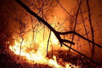 حریق موجب تجدید حیات جنگل میشود