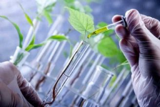 زیست فناوری و امنیت غذایی