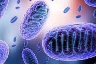 آخرین وضعیت بروز قارچ سیاه در بیماران کرونا/ روند تامین دارو و راهکارهایی برای پیشگیری