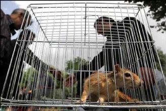 جرائم ، بازدارنده برای نگهداری و قاچاق حیوانات